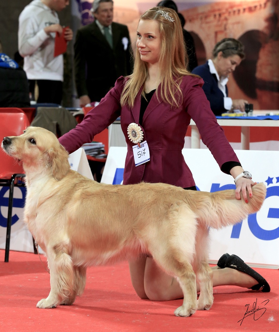 Kukkola Private Dancer Ecc1 CACIB BOS   con Dorothy Sabova  and she is now EASTER WINNER 2015!